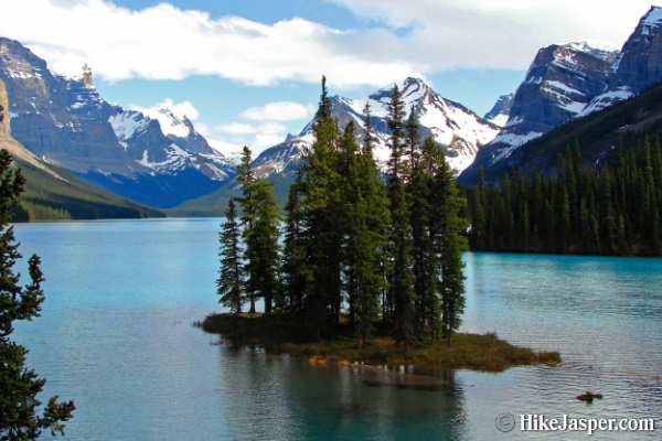 Jasper Wildlife and Waterfalls Tour with Maligne Lake Cruise from Jasper